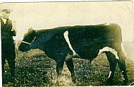 HPA745   Geordie Muir, Levisgarth