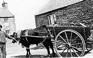 HPA486   Ox cart at Kettletoft Pier
