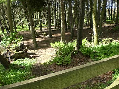 binscarth woods - june meeting