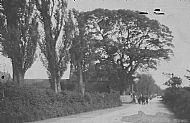 8: Poplars Farm