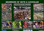 SOUTH SKYE LOCHS SEAWEEDS