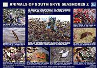 SOUTH SKYE LOCHS ANIMALS 2