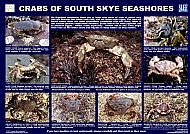 SOUTH SKYE LOCHS CRABS