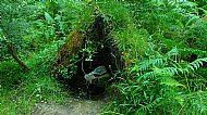 Nest Taynish