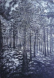Scots Pine. Sold