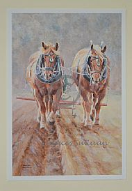 Autumn Suffolks - Suffolk horses ploughing