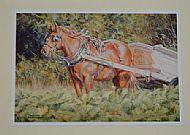 Beet Carting - Suffolk Horse