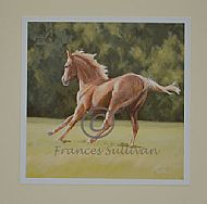Free Spirit - young horse
