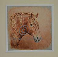 Handsome Suffolk - Suffolk Horse