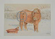 Snowy Friends - Shetland pony and robin