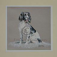 Springer - dog spaniel