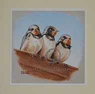 Waiting for Mum - Barn Swallows