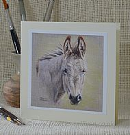 Curious - donkey