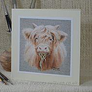 Highland Bairn - cattle