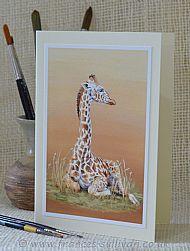 Just Resting - giraffe calf