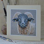 Norfolk Horn - sheep