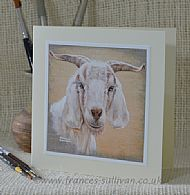 Sunny Goat