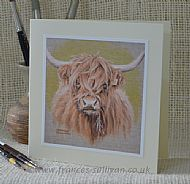 Young Highland - cattle