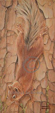 Downward Dash - Red Squirrel