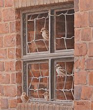 group of house sparrows perched on sheep netting in a pig sty window