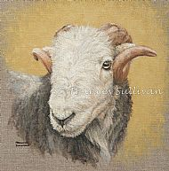 Handsome Herdwick - sheep  SOLD