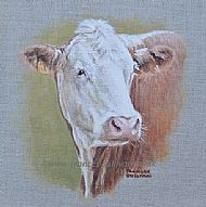 Hereford Heifer - cattle