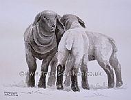 Playgroup - Suffolk sheep lambs