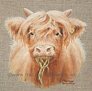 Highland Bairn - Highland calf SOLD