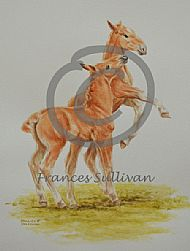 Playtime  - Suffolk Horse foals