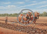 Ploughing a Straight Furrow - suffolk horses working  SOLD