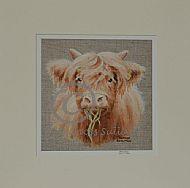 Highland Bairn - Highland calf