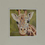 Looking - giraffe