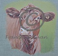 Red Poll - Cattle SOLD