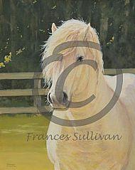 September Sun - grey pony