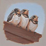 Watching for Mum - Barn Swallows