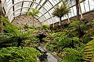 The Fernery, Benmore