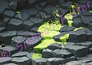 Green algae spreading over grey basalt