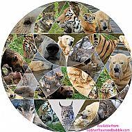 Carnivores - wolf, lynx, polar bear, wolverine, amur tiger