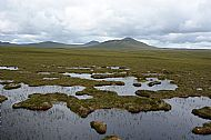 Moody bogland