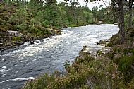River flowing through Caledonian Pine Forest