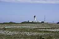 Lighthouse behind Bog Cotton