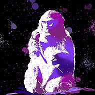 The Snow Monkey