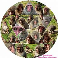 The Many Faces of Snow Monkeys