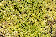 A Bed of Sphagnum Moss