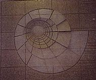 Ammonite Wall Panel
