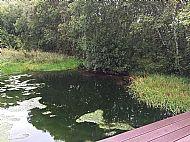 vegetation in pond