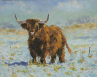 Highland coo  (sold)