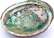 Abalone Shell 5-6