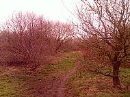 Middlewick Scrub Oak.