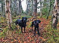 Woods:  Culloden Woods